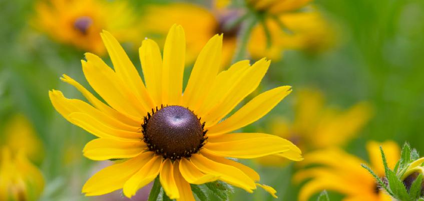 yellow daisy.jpg